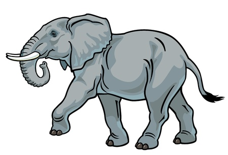 elephant,africa animal,side view picture isolated on white background Stock Vector - 17624416