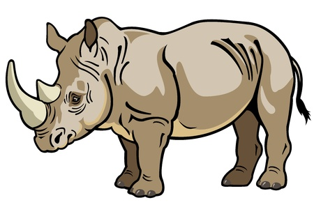 rhinoceros: rhinoceros,africa animal,side view picture isolated on white background