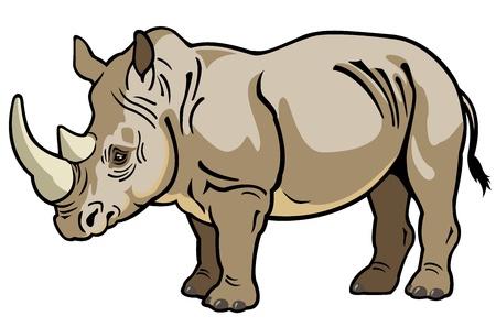 rinoceronte, africa animal, imagen vista lateral aislado sobre fondo blanco