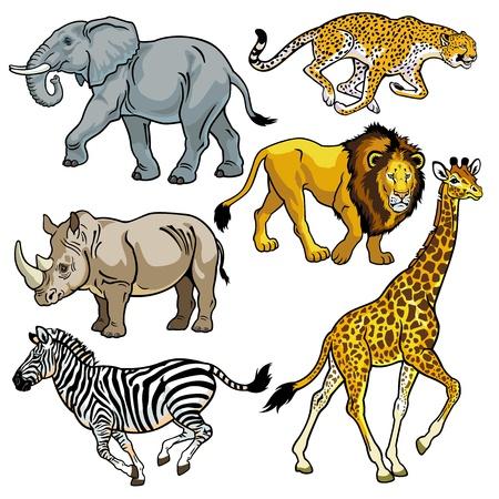 nashorn: Set mit afrika, Tiere der Savanne, Bilder auf weißem Hintergrund