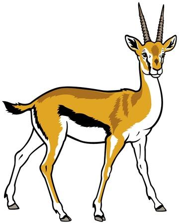 thomson gacela, africa animal, imagen Vista lateral aislada en el fondo blanco Ilustración de vector