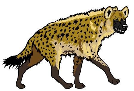 hiena manchada, africa animal, imagen Vista lateral aislada en el fondo blanco