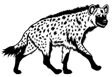 hiena manchada, africa animal, negro cuadro blanco, ilustración vista lateral Ilustración de vector