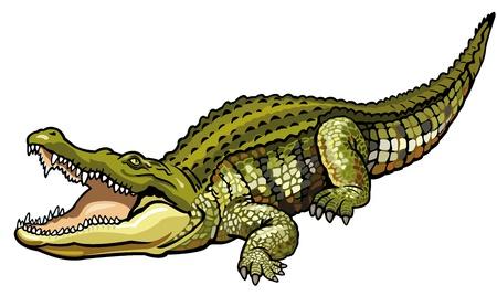 나일 강: 나일 악어, crocodylus의 niloticus, 아프리카 야생 동물, 흰색 배경에 고립 된 측면보기 그림 일러스트