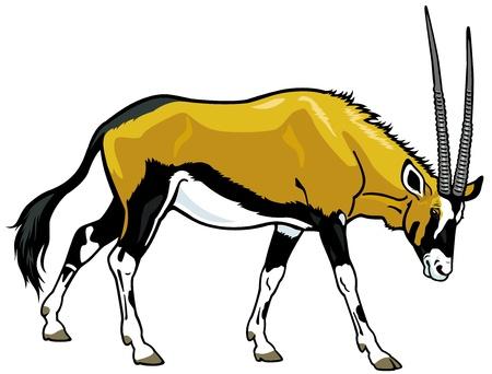 gazelle: gemsbok,oryx gazella,wild animal of africa,side view illustration isolated on white background