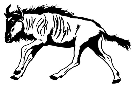 of antelope: blue wildebeest,connochaetes taurinus,wild animal of africa,side view black and white picture  Illustration