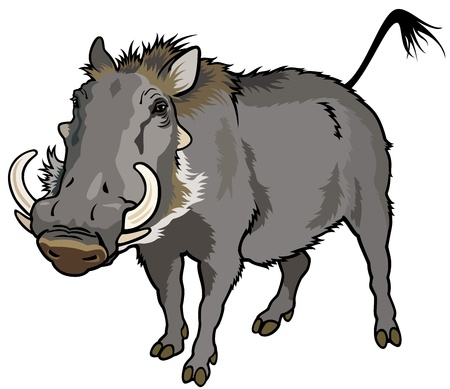 vårtsvin, phocochoerus africanus, vilda djur av afrika, bild isolerad på vit bakgrund Illustration