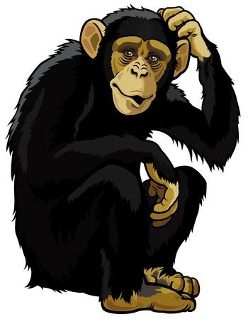 aap chimpansee, simia troglodytes, zitten pose, foto geïsoleerd op witte achtergrond
