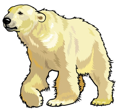 predator: polar bear