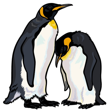 emperor penguins,aptenodytes forsteri,picture isolated on white background Vector