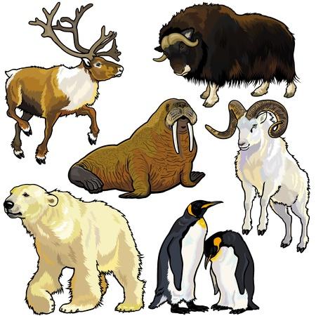 animaux zoo: définir avec les animaux de l'Arctique, photos isolées sur fond blanc