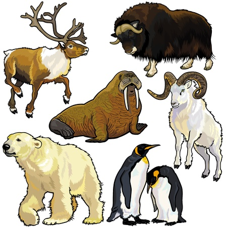 antarctic: set with animals of arctic,pictures isolated on white background