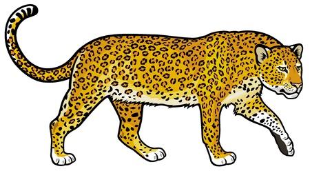 luipaard, Panthera pardus, wild dier van Afrika, zijaanzicht foto op een witte achtergrond