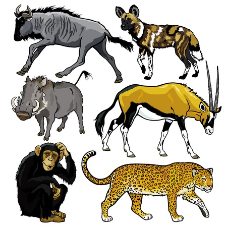 warthog: set with wild animals of africa,pictures isolated on white backgound Illustration