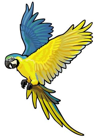 amazon rainforest: macaw,ara ararauna,blue and yellow parakeet of amazon rainforest,picture isolated on white background