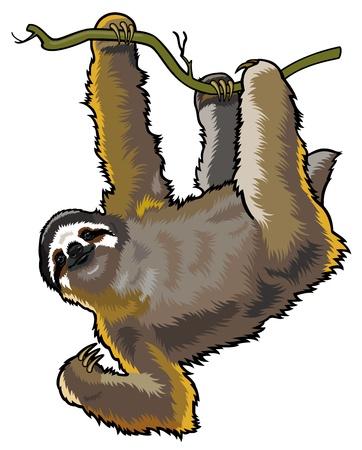 perezoso: throeted marr�n perezoso de tres dedos, Bradypus variegatus, animal salvaje de la selva amaz�nica, una imagen aislada en el fondo blanco