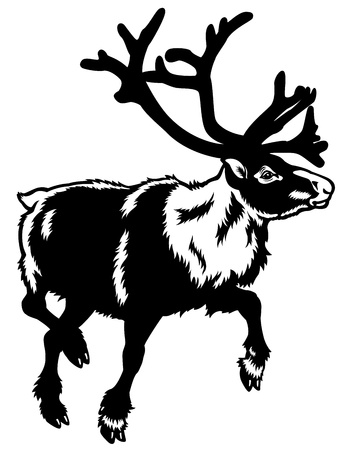 caribou reindeer,rangifer tarandus,animal of arctic,black white illustration Vector