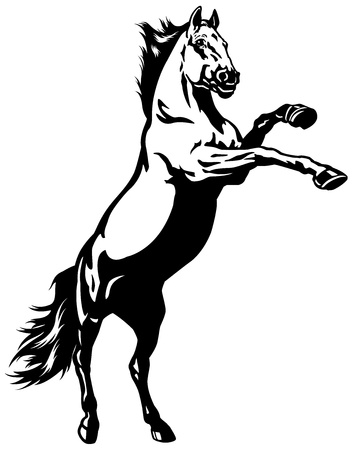 rearing: horse,rearing stalion,black and white illustration