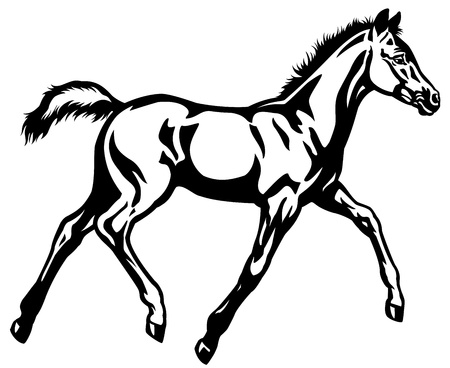 foal,black and white side view illustration Vector