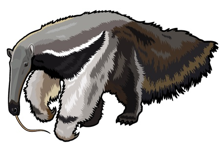 anteater: giant anteater,myrmecophaga tridactyla,wild animal of amazon rain forest,picture isolated on white background