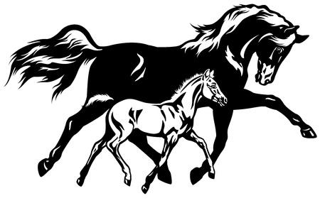 Jument avec poulain, image vue de côté en noir et blanc