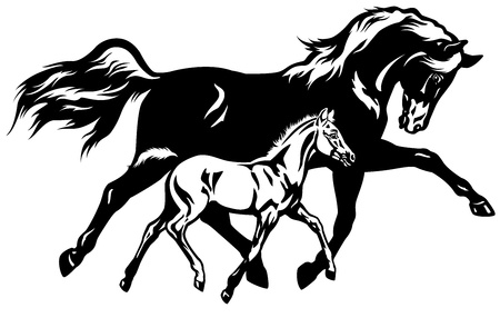 mare with foal,black and white side view picture Vector