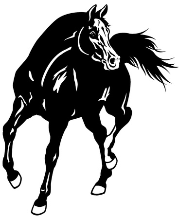 gelding: arabian horse,black white illustration Illustration
