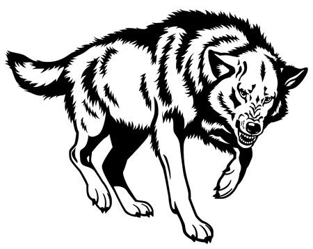 wolf, canis lupus, aanvallende houding, zwart en wit geïsoleerd beeld