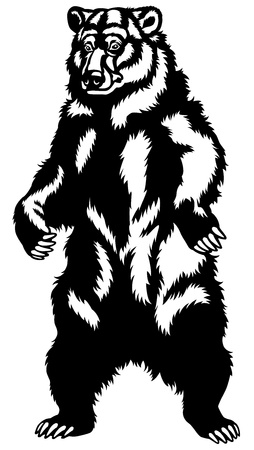 beast creature: grizzly bear stand up pose,black and white front view picture