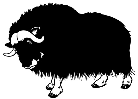 muskox,black and white side view illustration
