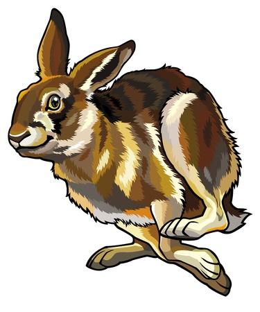 흰색 배경에 고립 실행 토끼, 토끼 자리의 europaeus, 그림 일러스트