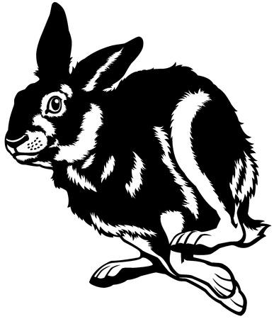 wild asia: running hare black and white illustration Illustration