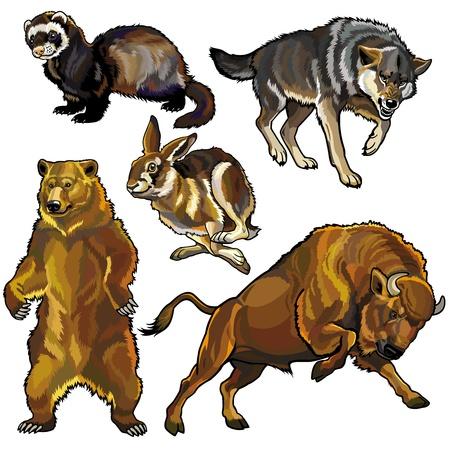 lepre: insieme con gli animali selvatici, bestie di europa foresta, immagini isolato su sfondo bianco Vettoriali