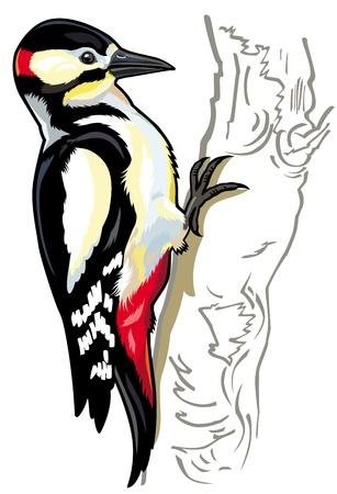 pico picapinos, imagen vista lateral aislado en fondo blanco