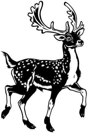 damhirsch: Damwild, Seitenansicht schwarze und wei�e Illustration