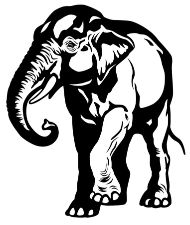 asian elephant black and white image Vector