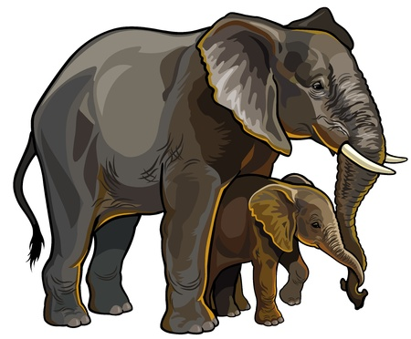 zoology: african elephant with baby side view illustration isolated on white background