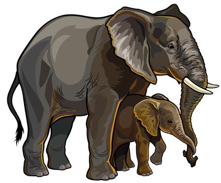 continente africano: elefante africano con vistas al bebé ilustración lado aislado sobre fondo blanco