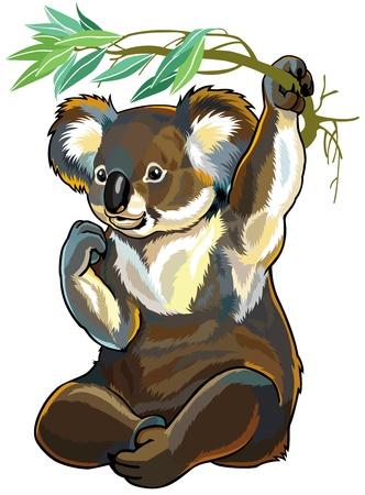 oso de koala aislado en fondo blanco