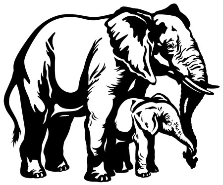 zoology: african elephant mother with baby black and white illustration