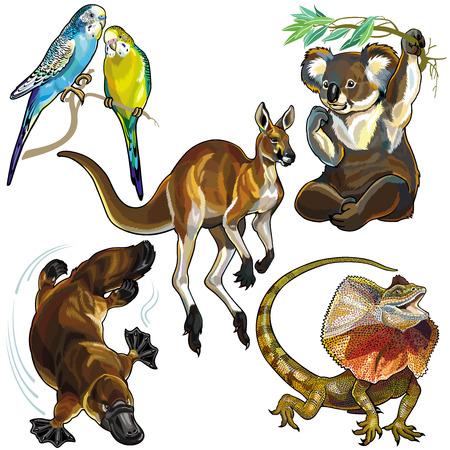 흰색 배경에 고립 된 호주의 야생 동물 세트