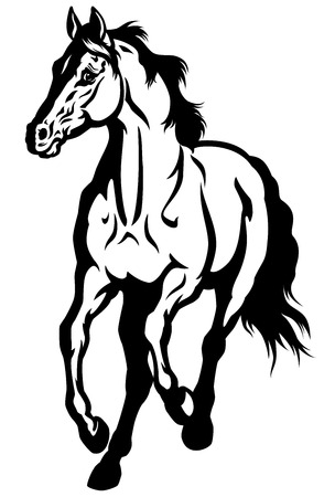 running horse front view black and white image Vector