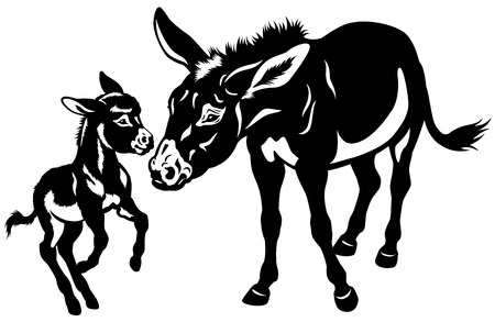 black ass: donkey mother with baby black and white illustration
