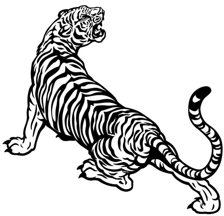 tiger black and white illustration Vector