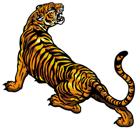 tigres: Tigre aislados sobre fondo blanco Vectores