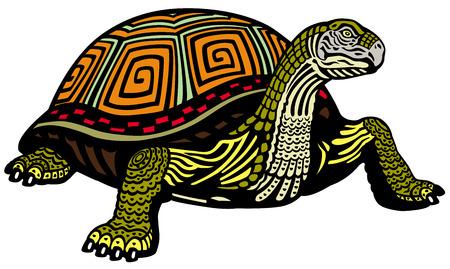 land turtle: turtle isolated on white background  Illustration