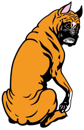 dog boxer breed , illustration isolated on white background Vector