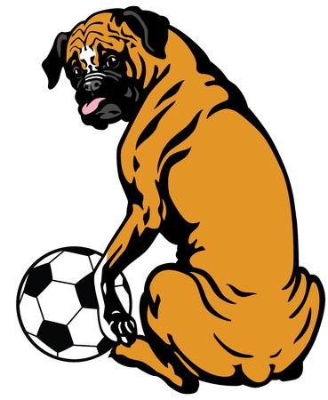 perro boxer: perro boxer con la ilustración del balón de fútbol aislado en el fondo blanco