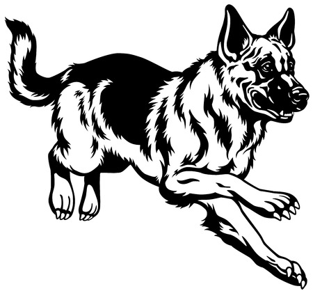dog running: dog german shepherd breed, black and white illustration
