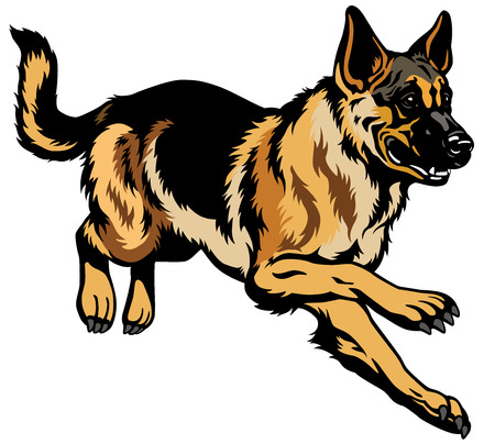 dog german shepherd breed  Illustration isolated on white background Vettoriali